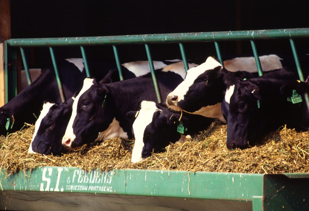New York Dairy Farms Skirt Clean Water Act Requirements